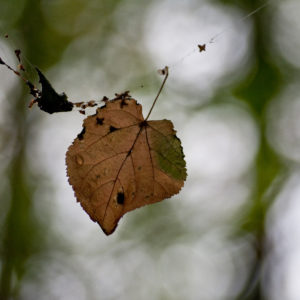 One Leaf – Many Perspectives