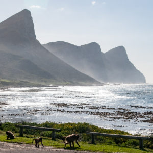 Coast of Cape Town
